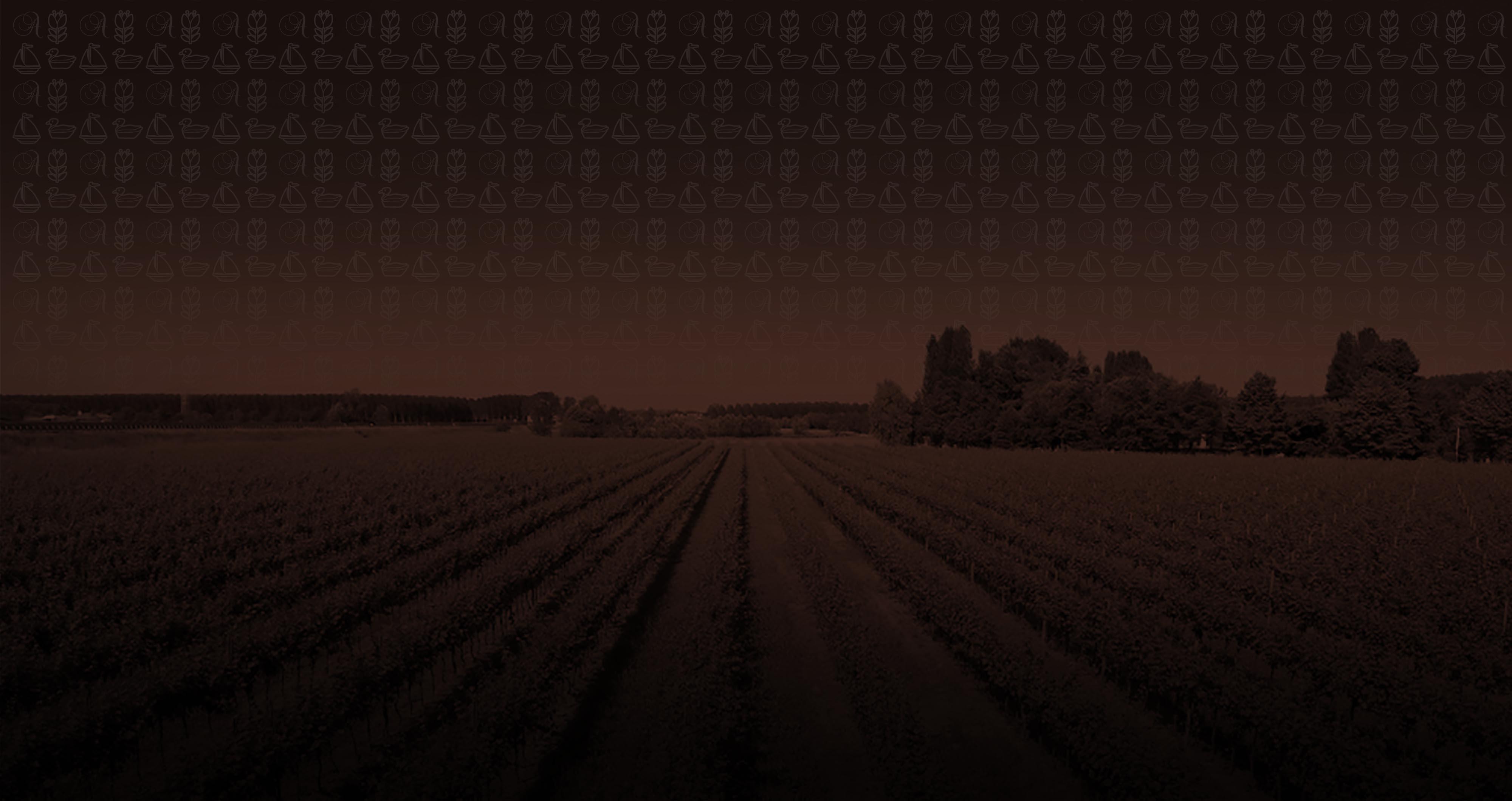 Azienda vinicola Reguta | slide